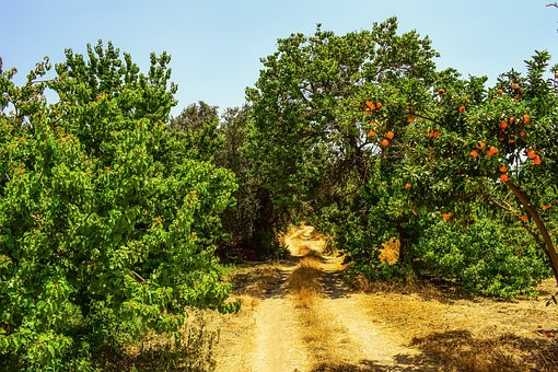 Dirt Road, Trees, Countryside, Landscape, Summer, Rural