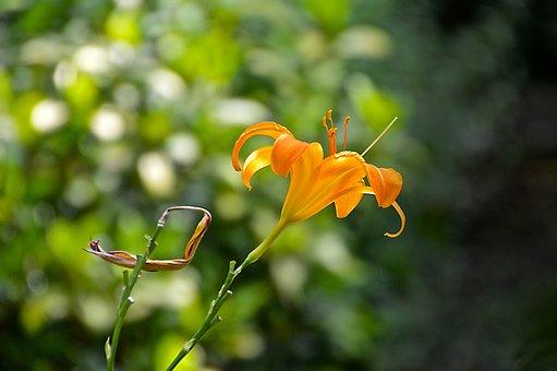 Flourished, Summer, Sun, Light, Shadow, Flower, Stengel