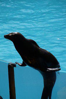 Zoo, Sea Lion, Strong, Supportive, In Support, Feat