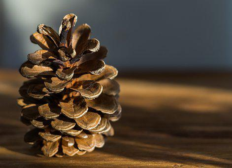 Nature, Background, Tap, Wood, Close, Brown, Pine Cones