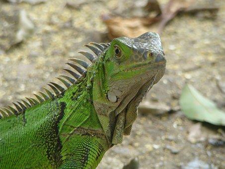 Reptile, Park, Animals