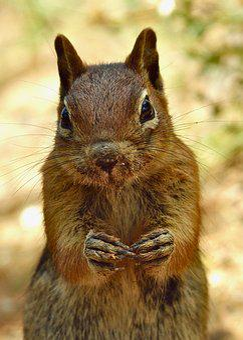 Animal, Squirrel, Cute