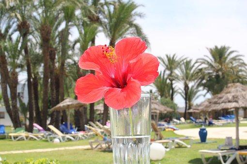Flower, Gibikus, Red, Bright, Beautiful, Palm Trees