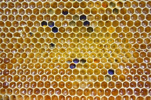 Honey, Comb, Pollen, Hexagon, Honeycomb, Cell, Golden