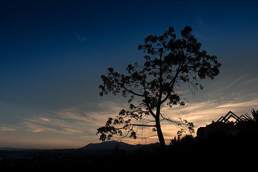 Sunset, Marbella, Tree, Trasluz, Horizon, Sky, Costa