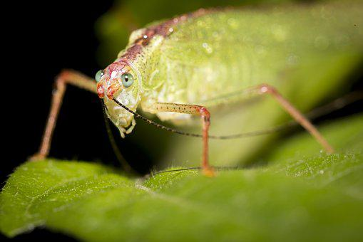 Insects, Vietnam, Green, Natural, Close-up