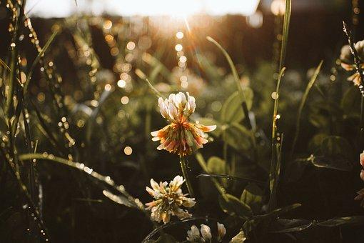 Flare, Flower, Nature, Grass, Amazing Flower