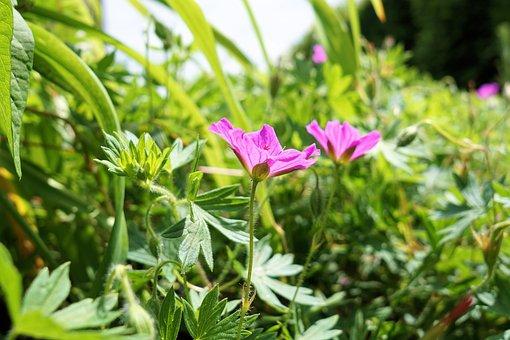 Flower, Grass, Nature, Meadow, Plant, Green, Landscape