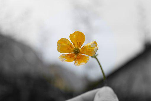 Flower, Nature, Spring, Plant