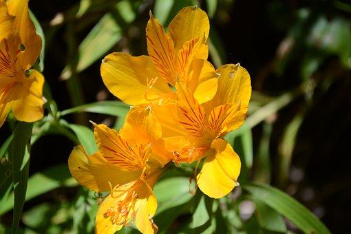 Flower, Yellow, Green, Petals Yellow, Nature, Macro