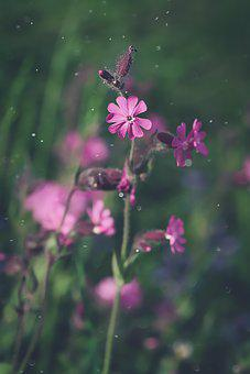Red Campion, Heath Orchid, Blossom, Bloom, Pink