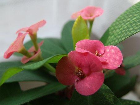 Flower, Small, Polka Dots