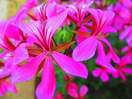 Flower, Pink Flower, Summer