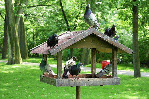 The Dovecote, Park, Birds