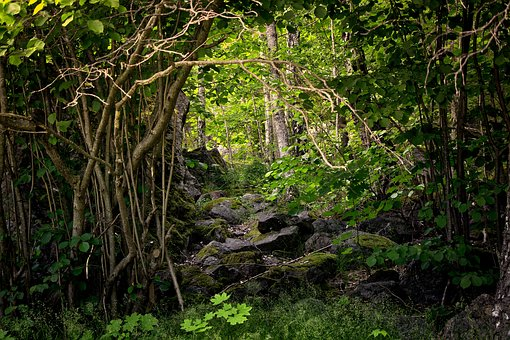 Forest, Nature, Marsh, Tree, Green, Rock, Park, Plant