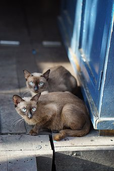 Cat, Friends, Asia, Vietnam, Pet, Animal, Young Cat