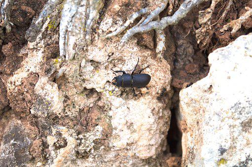 Scarab, Ants, Attack, Danger, Nature