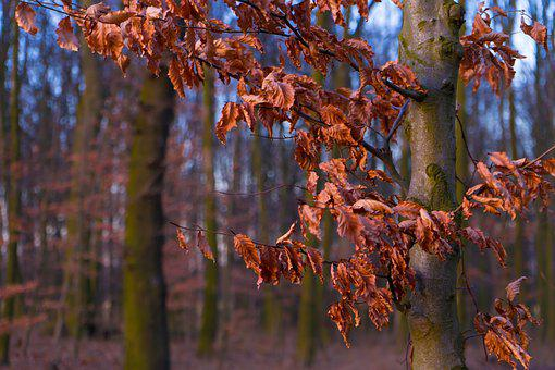 Autumn, Leaves, Forest, Withered, Tree, Golden Autumn