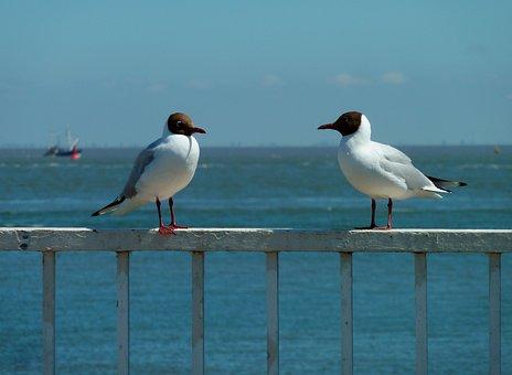 Gull, Holiday, Sea, Water, Beach, Nature, Bird, Coast