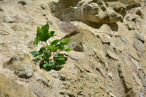 Rock, Wall, Plant, Grow, Enforce, Assertiveness, Karg