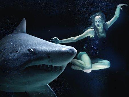 Woman, Hai, Great White Shark, Underwater, Sea