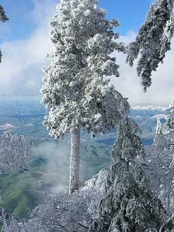 Tree, Snow, Winter, View, Cold, Nature, Season, Frost