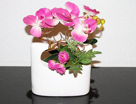 Vase, Orchid, Pink, Green, Flower, Plant, Flowers