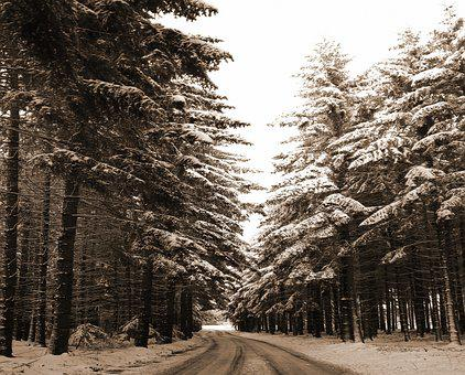 Winter Forest, Nostalgia, Firs, Snow, Rest, Wintry