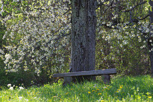 Bank, Park, Forest, Benches, Resting Place, Leaves