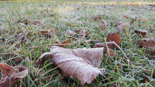 First Froze, Frozen, List, Autumn, Grass, Winter, Cold