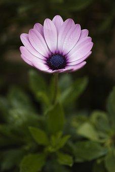Flower, Nature, Spring, Spring Flowers, Flowers, Macro