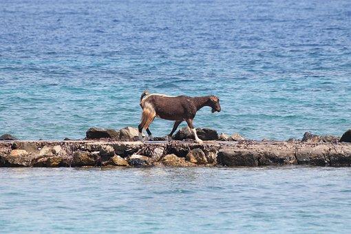 Goat, Sea, Island, Greece, Nature, Animal, Ocean, Water