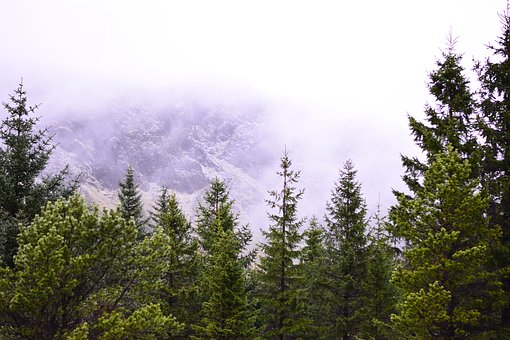 Iceland, Forest, Green, Pine Tree, Landscape, Mountains