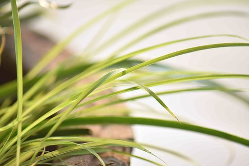 Leaves, Long, Plant, Pot, Greenery, Macro, Over Exposed