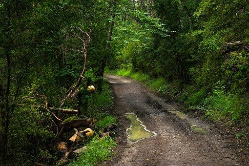 Nature, Green, Blue, Tourism, Santiago Path