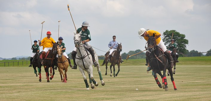 Polo, Horses, Riding, Sport, Club, Player, Equine