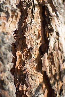 Bark, Texture, Ponderosa, Pine, Natural, Nature