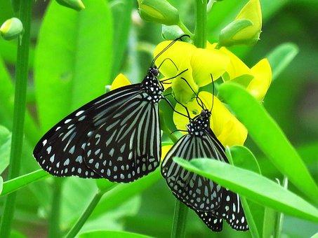 Love, Butterfly, Nice
