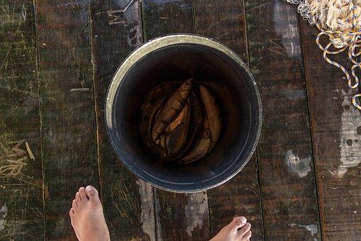 Fish, Bucket, Fishing