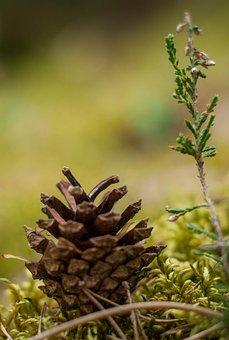 Pine, Wood, Foam, Forest