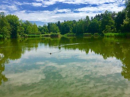 Lake, Switzerland, Summer, Forest, Nature, Water