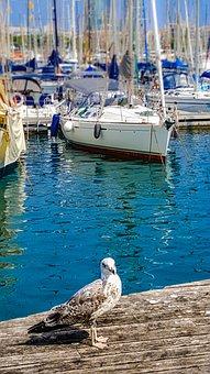 Seagull, Seabird, Harbor, Boats, Masts, Mediterranean