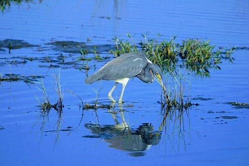 Bird, Florida, Water, Animal, Waterfowl