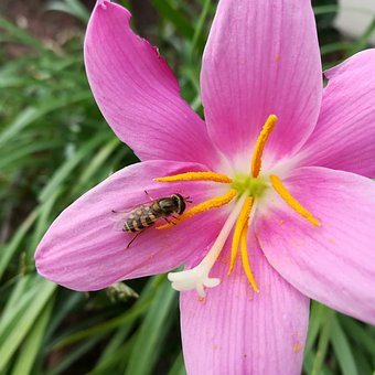 Flowers, Color, Bee, Wasp, Insect, Nature, Pistil
