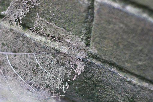 Corrosion, The Leaves, Gray, Brick Wall, Vein, Leaf