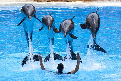Canary Islands, Tenerife, Loro Park, Dolphins