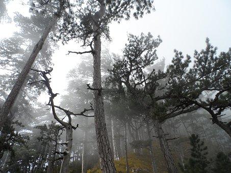 Crimea, Ai-petri, Mountains, Forest, Fog, Pine