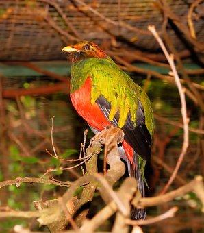 Bird, Colorful, Gold Head-quetzal, Spring Dress