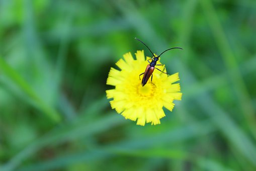 Beetle, Flower, Summer, Sunny, Nature, Yellow, Green
