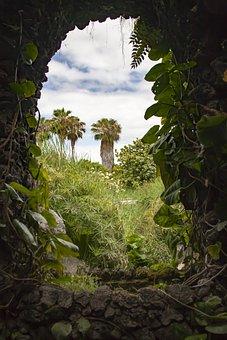 Tenerife, Palm, Garden, Canary Islands, Palm Tree